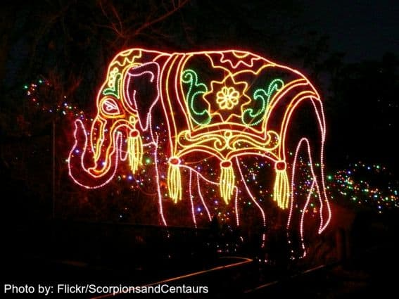 Lights at the Denver Zoo Christmas Events in Denver