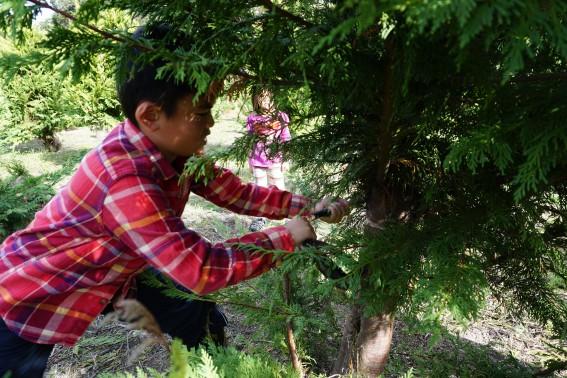 Tips for Christmas Tree Farm