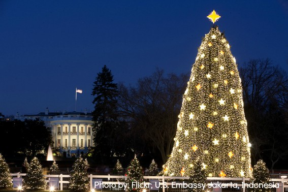 Washington D.C. National Christmas Tree