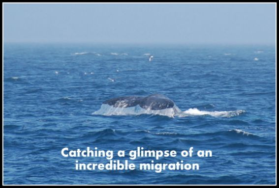 Whale watching with kids