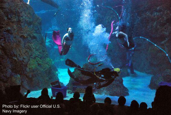 Denver Aquarium from Flickr user Official U.S. Navy Imagery