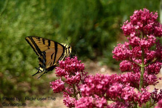 Denver Botanic Gardens Flickr user The Consortium