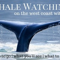 Whale Watching with kids on the west coast