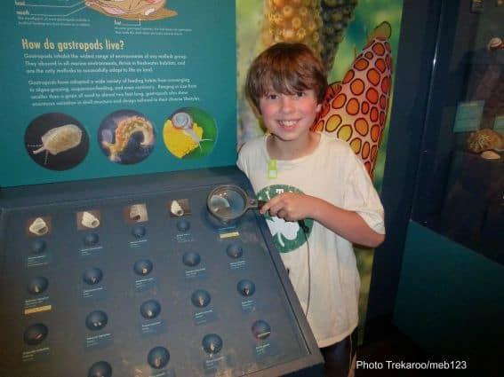 harvad natural history museum