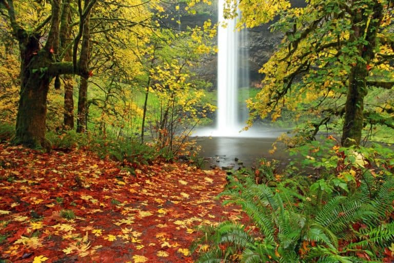 Fun things to do in Oregon include visiting Silver Falls State Park