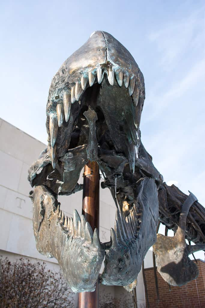 museum of the rockies is a great place for dinosaur lovers to visit in Montana