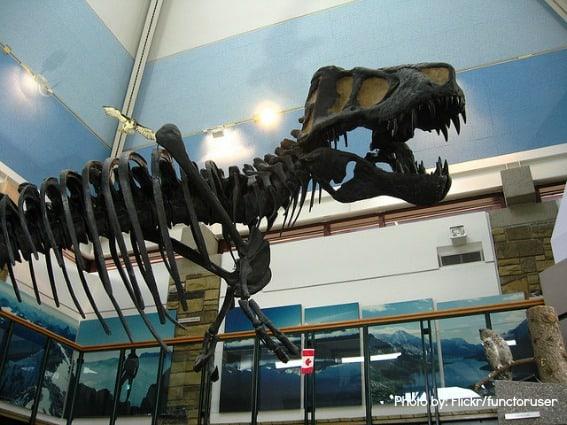 Dinosaurs Montana Top 10 Trekaroo dinosaurs