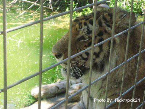 SoCal:  Kid-friendly Animal Encounter Alternatives to Zoos
