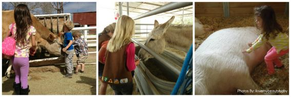 Kid-friendly Gentle Barn California animals in southern california