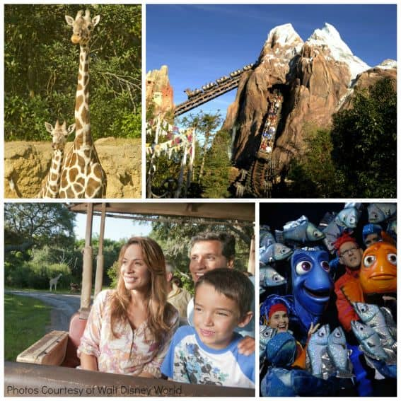 Walt Disney World Animal Kingdom Collage