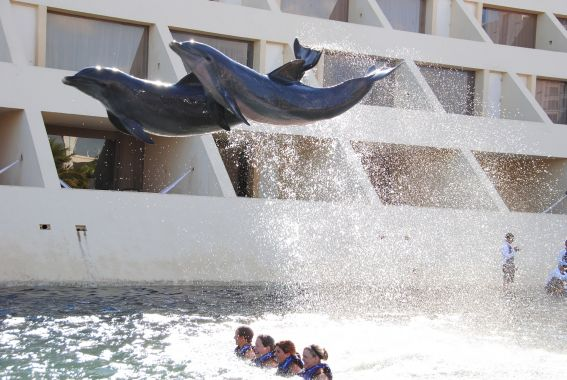 dolphin encounters for kids Cancun