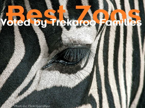 Best Zoos Across America- as voted by Trekaroo Families