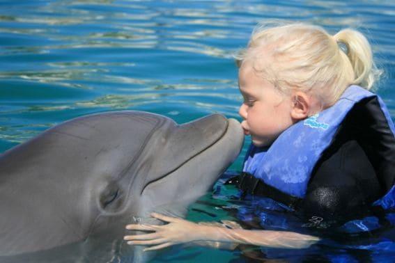 Dolphin-Kiss