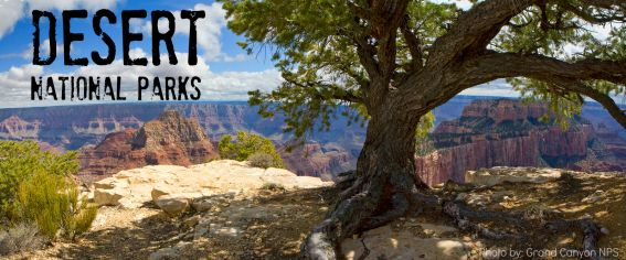 Exploring the desert National Parks with kids