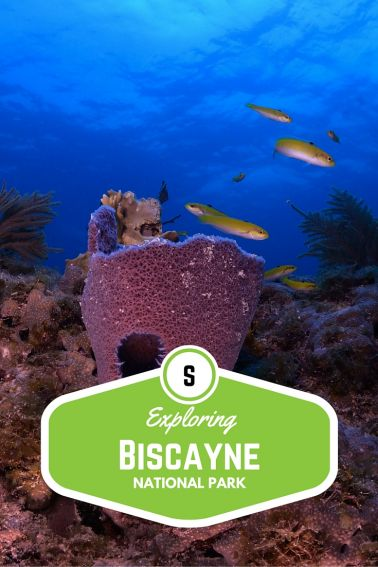 Exploring Biscayne National Park with Kids