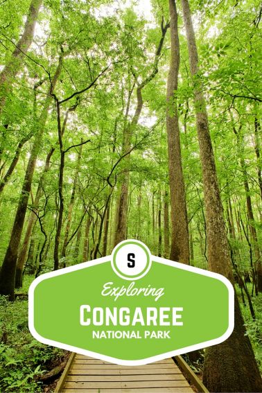 Exploring Congaree National Park with Kids