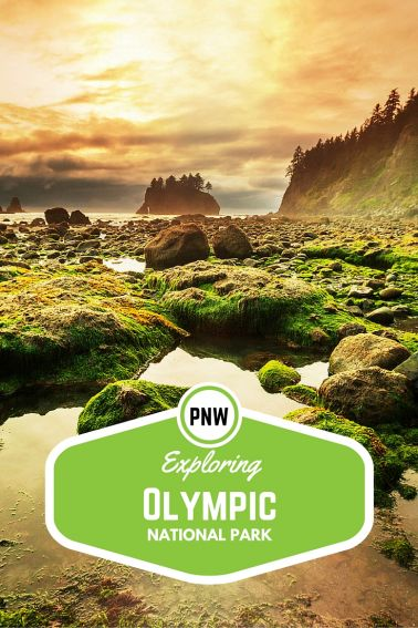 Exploring Olympic National Park with Kids
