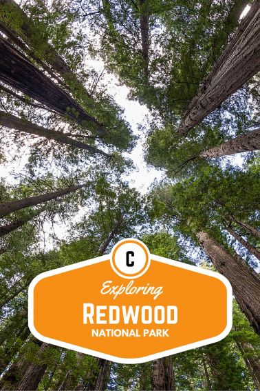 Exploring Redwood National Park with Kids