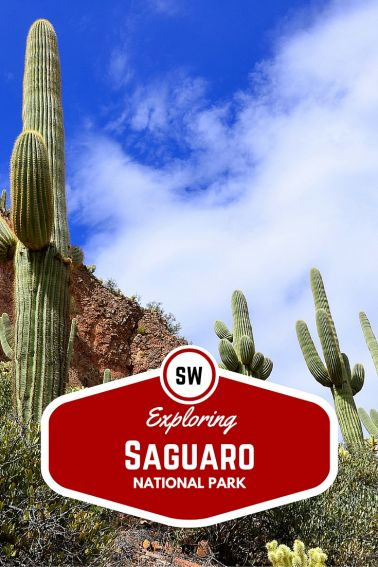 Exploring Saguaro National Park with Kids