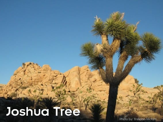 Joshua-Tree-desert national parks