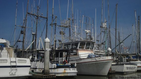 Discover Moss Landing with Kids: Harbor  Photo by: Trekaroo/kristined