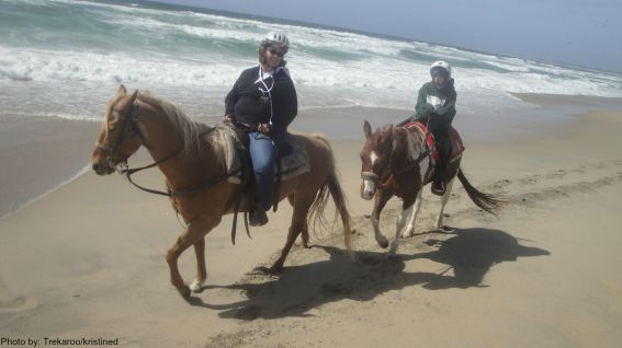 Discover Moss Landing with Kids: Horses  Photo by: Trekaroo/kristined