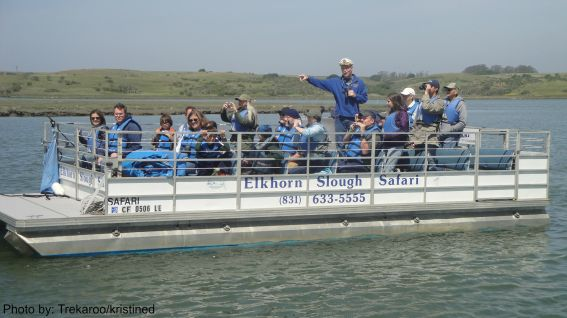 Elkhorn Slough Safari Discover Moss Landing with kids Photo by: Trekaroo/kristined