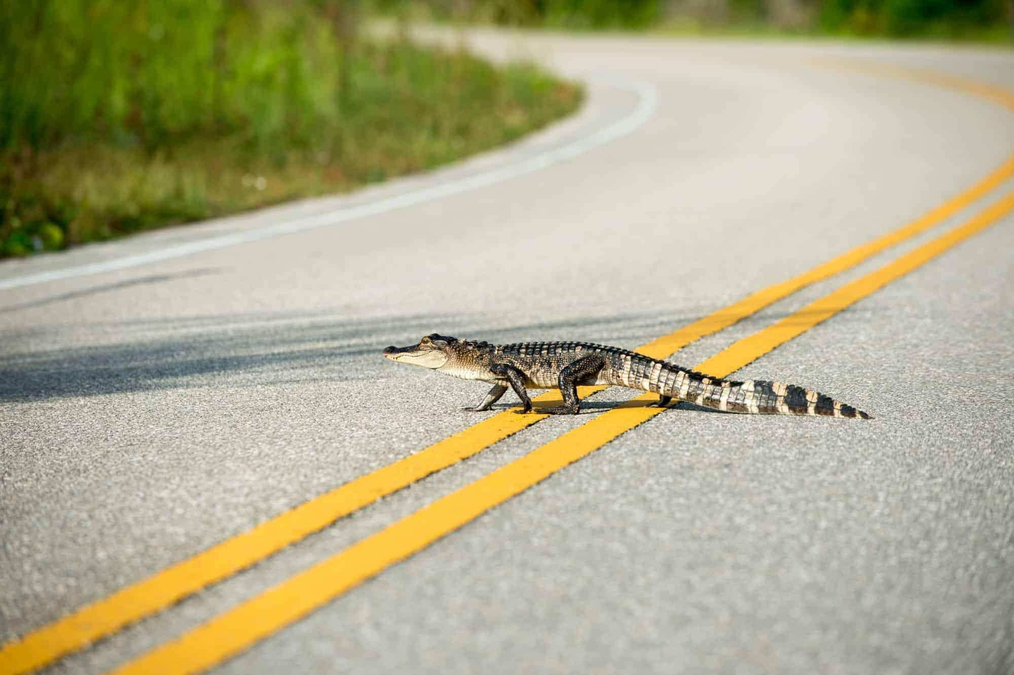 Florida Road Trip Itinerary: Key Largo to Central Florida