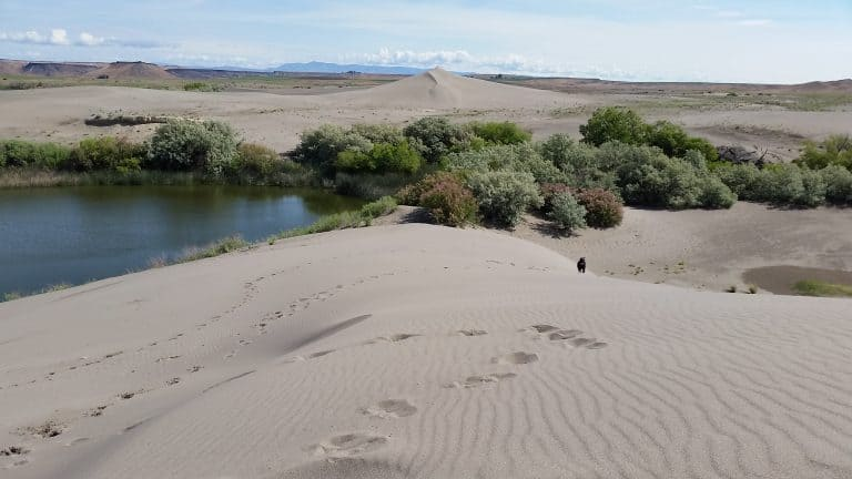 fun things to do in Idaho Bruneau Dunes State Park
