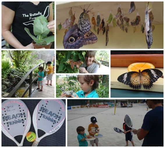 Kid friendly Aruba Butterfly tennis