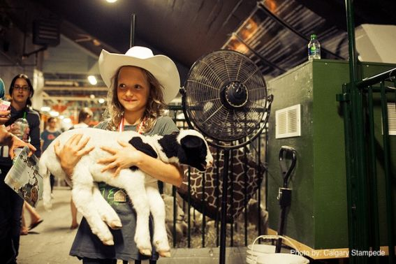 Calgary Stampede with Kids - pet a goat