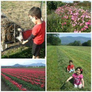 Washington Farms with Kids Photo by: Carrie Yu