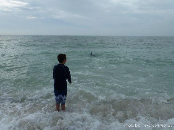 kid friendly north captiva dolphin