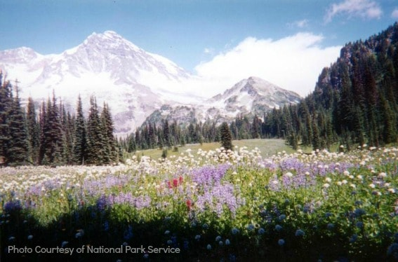 Top 10 Things for Families to do in Washington State: Mt. Rainier in Washington State Photo courtesy of: National Park Service