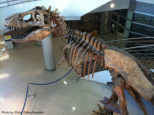 California Dinosaur Encounters & Digs for Families and Kids: T-Rex University of California Museum of Paleontology at Berkeley kids Photo by: Flickr/Dallas Krentzel