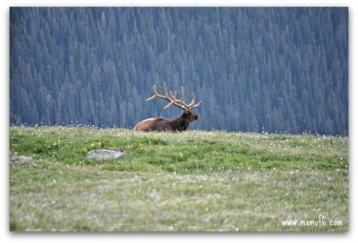 Troo American Road Trip explores Rocky Mountain National Park - Day 4 1