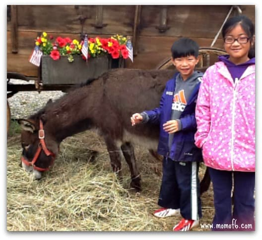 kids with burro