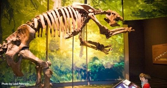 tellus_museum_dinosaur_atlanta