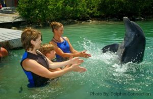 Hawks Cay Resort Dolphin Connection Splash