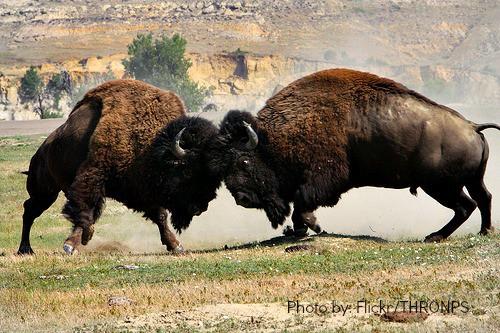 Teddy Roosevelt National Park Top Ten North Dakota