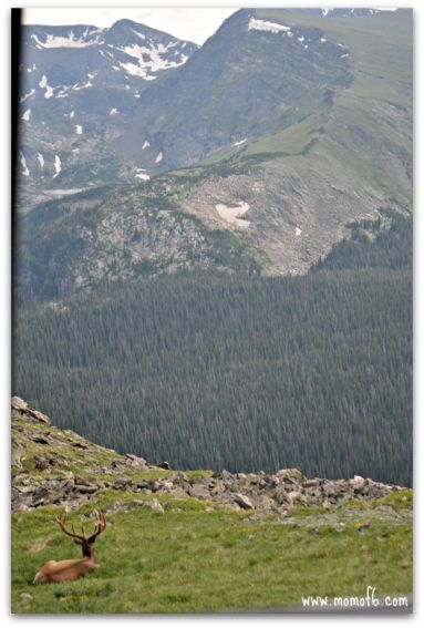 Hiking and seeing wildlife in Rocky Mountain National Park