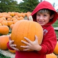 Pumpkin_patch_kid_trekaroo_carousel