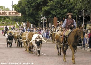 Top 10 Things to Do with Families in Texas Ft. Worth Herd Photo Courtesy of Ft. Worth CVB
