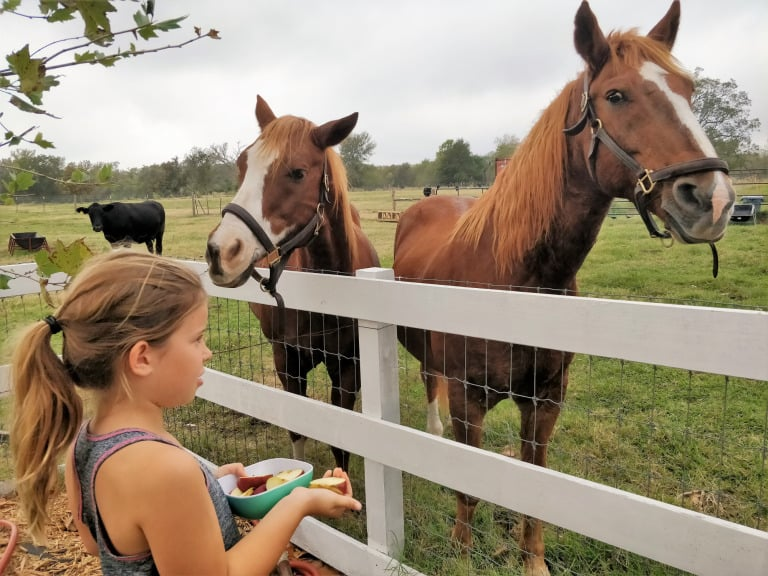 Things to do in Texas with kids Farm Stay