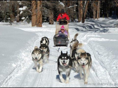 Best Dog Sledding Spots for Families