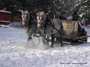 Minnesota Forest History Center- Winter Camp Horse Team