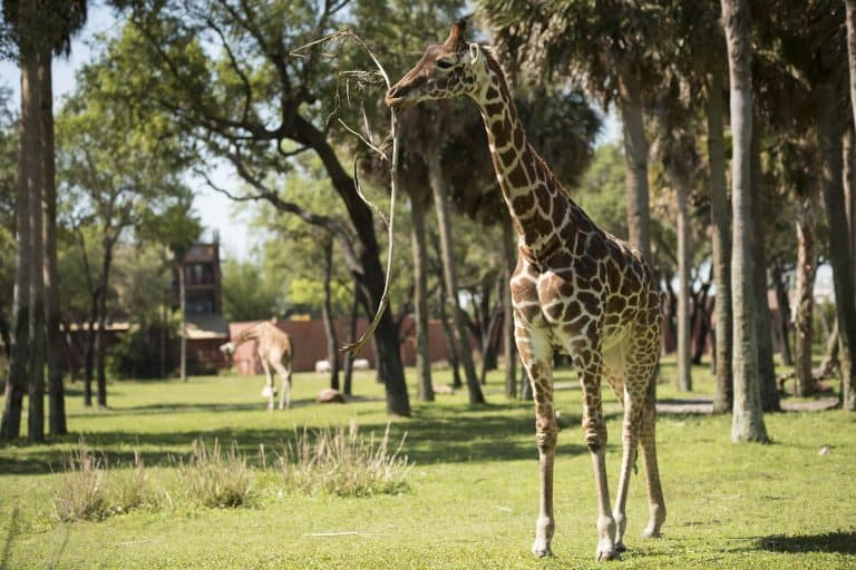 Things to Do In Disney World Outside the Theme Parks: Explore the Resorts