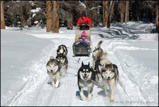 Dog sled kids