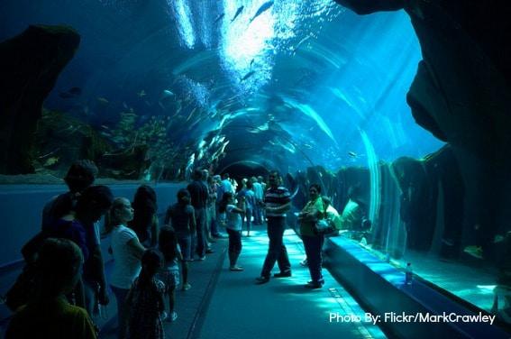 Georgia Aquarium Sleepover