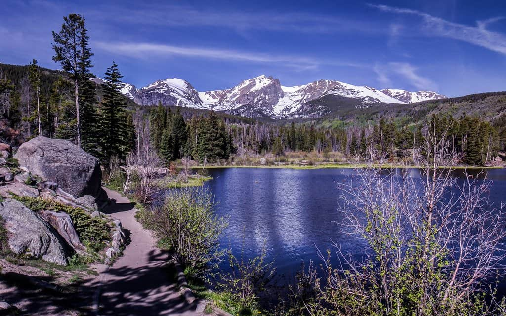 sprague lake is a good place to spot moose in Rocky Mountain National Park